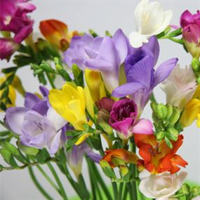freesias 400x