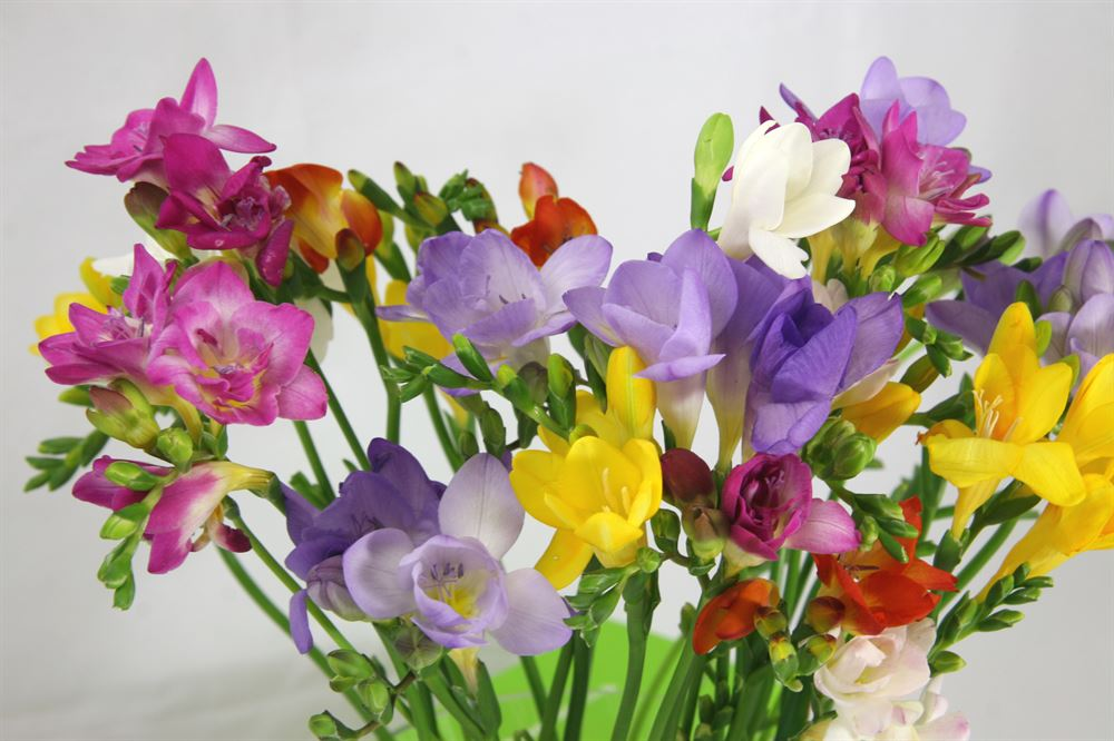send cut flowers by post from cornwall for uk delivery