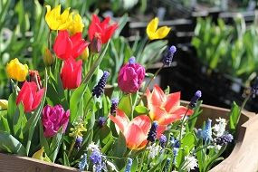 Spring bulb collections